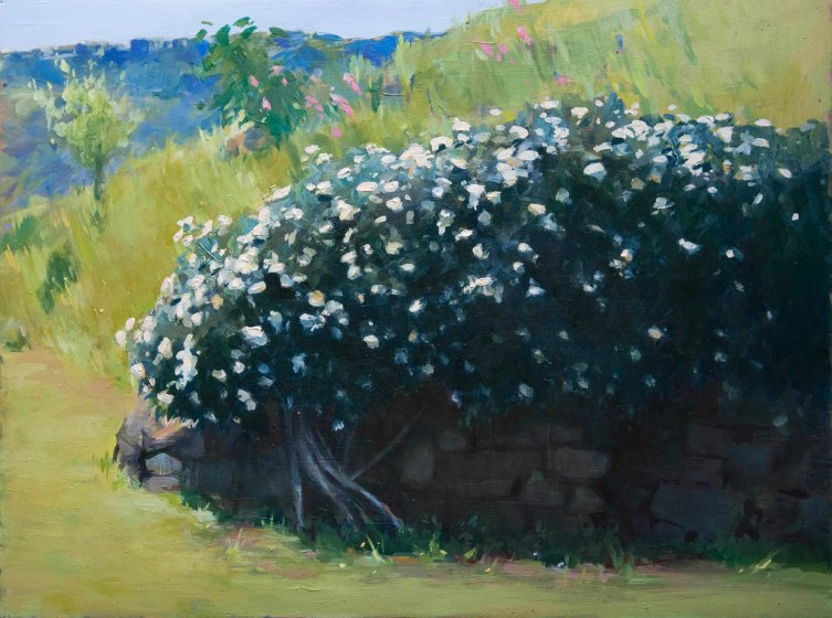 White Roses. Oil on board, 25cm x 35cm.