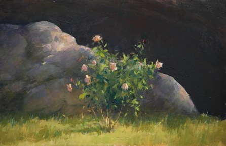 Rose Study #1, oil on wooden board, 20cm x 30cm