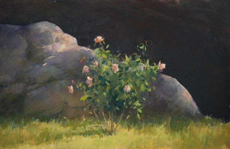 Rose Study #1, oil on wooden board, 20cm x 30cm